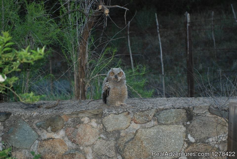 Our little friend | Image #6/18 | El Rancho Robles guest ranch and retreat center
