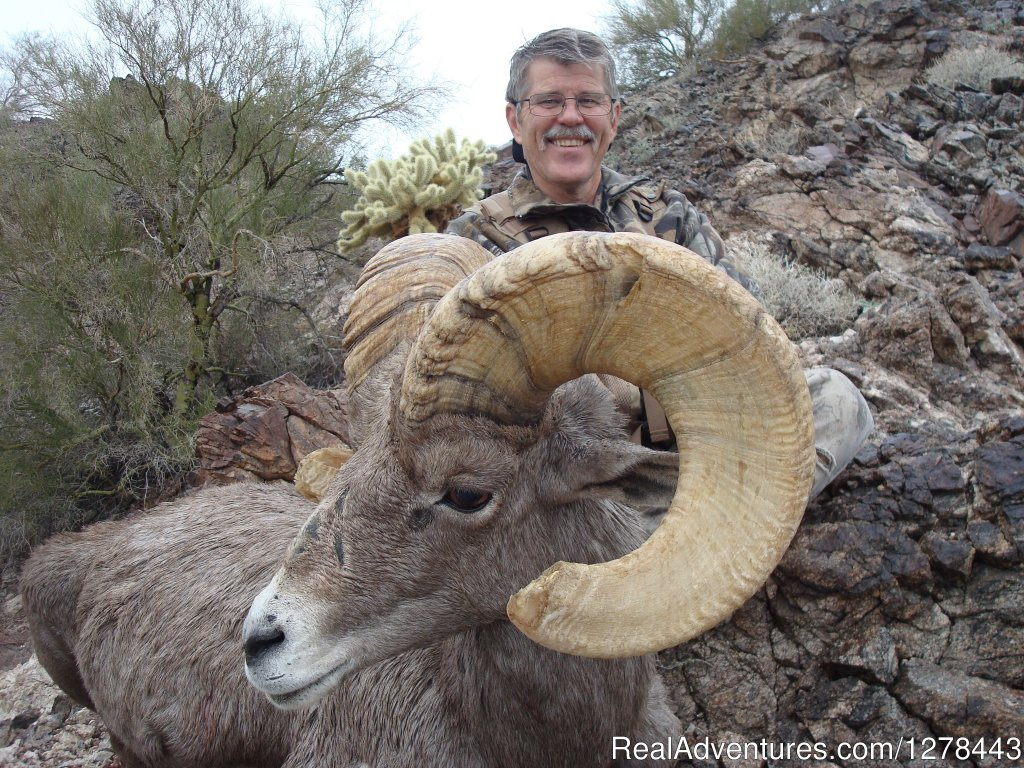Desert Bighorn Sheep | Image #1/11 | Vail, Arizona  | Hunting Trips | Arizona Guided Hunts