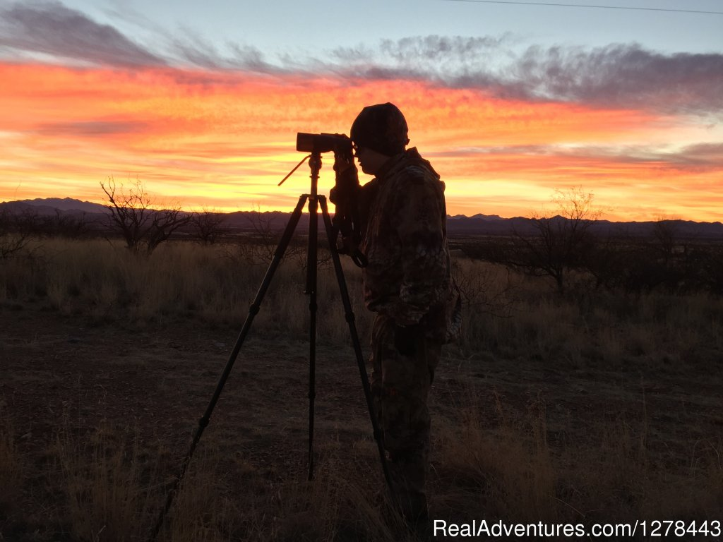 Glassing for Big Game animals in the deserts of Arizona | Image #6/11 | Arizona Guided Hunts