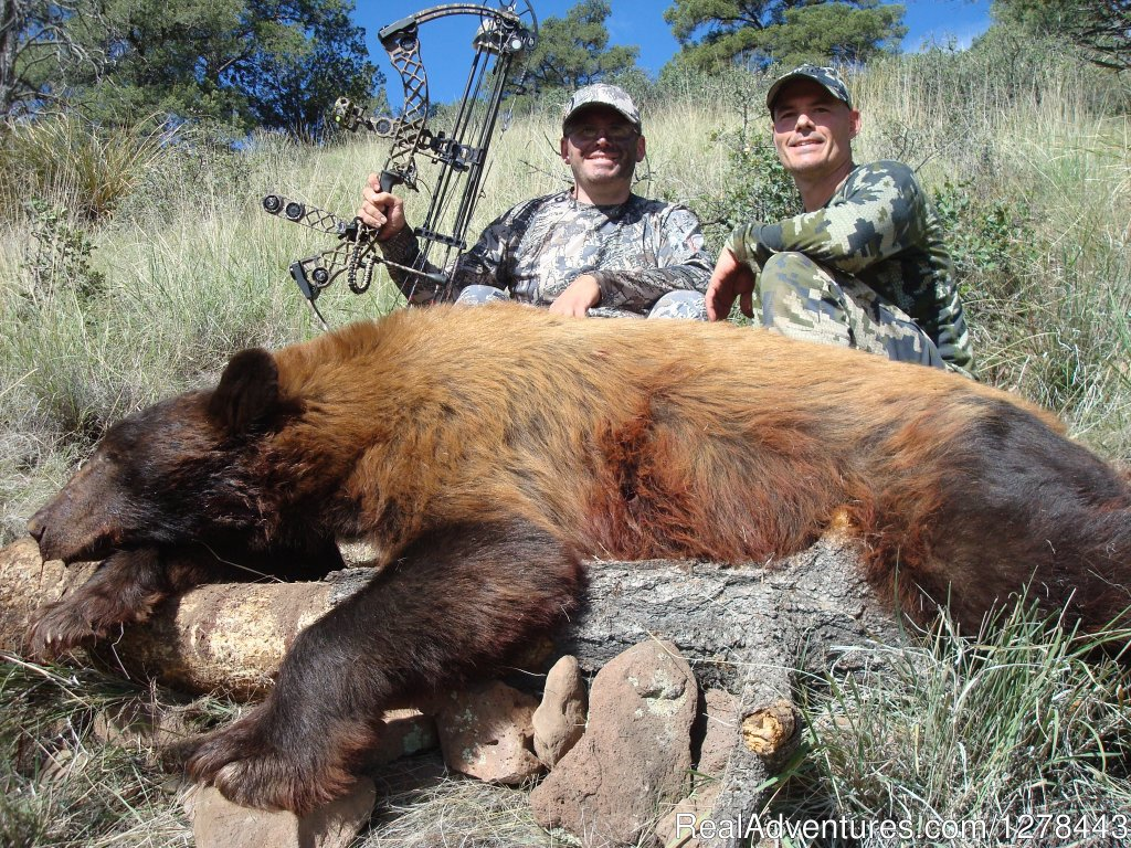 Arizona Bear Hunting | Image #8/11 | Arizona Guided Hunts