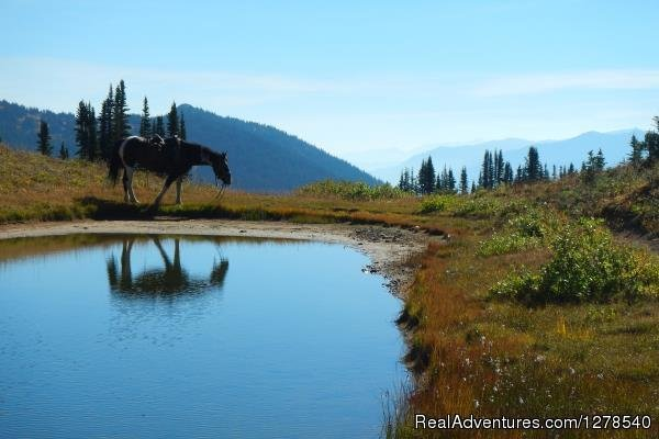 Horse at lake | Image #2/11 | Chilcotin Holidays