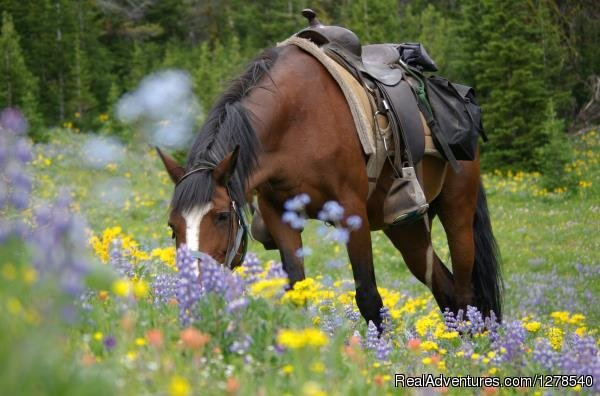 Horse and Flowers | Image #11/11 | Chilcotin Holidays