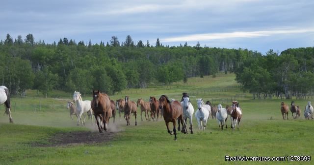 100+ Herd of Horses - The Flying U Ranch