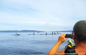 Ecosummer Expeditions Port McNeill, British Columbia Kayaking & Canoeing