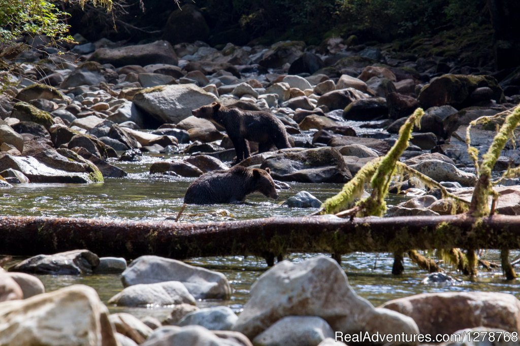 Grizzlies | Image #8/9 | Blackfish Lodge