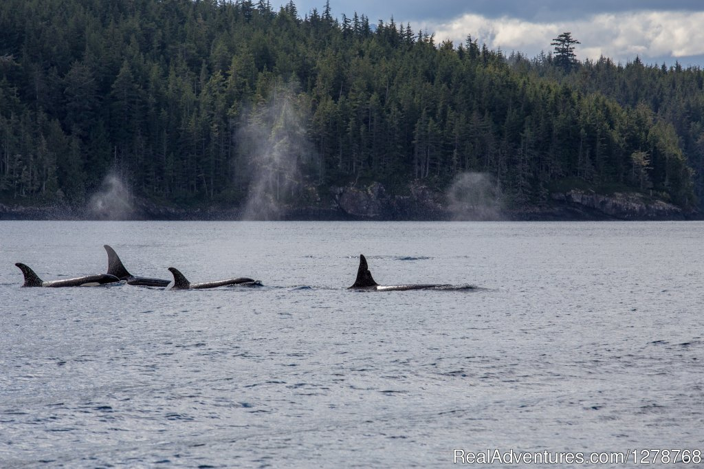 Orcas | Image #9/9 | Blackfish Lodge