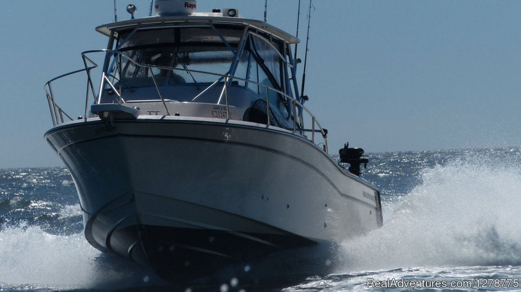 On the move | Image #7/11 | Wild Pacific Charters