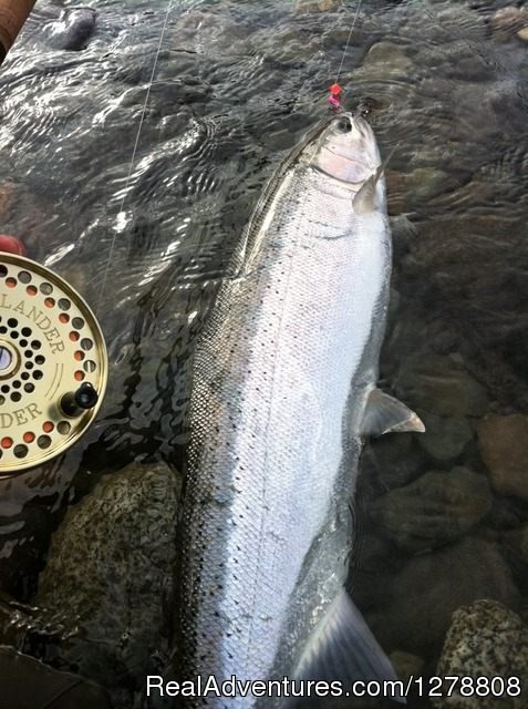 Steelhead in BC - STS Guiding Service