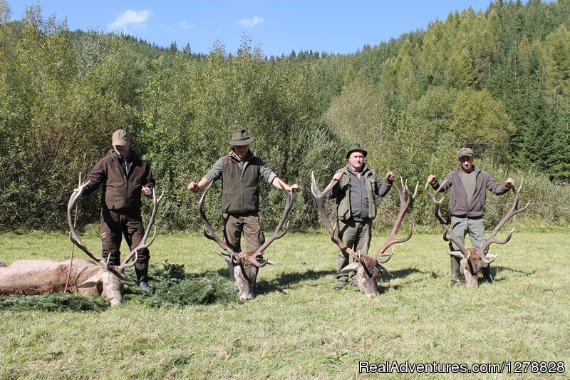 Red deer hunting in Romania | Image #6/26 | Big and small game hunting in Romania