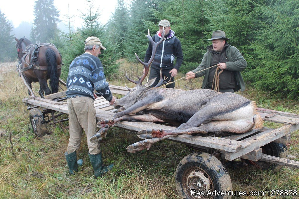 Red deer hunting in Romania | Image #9/26 | Big and small game hunting in Romania