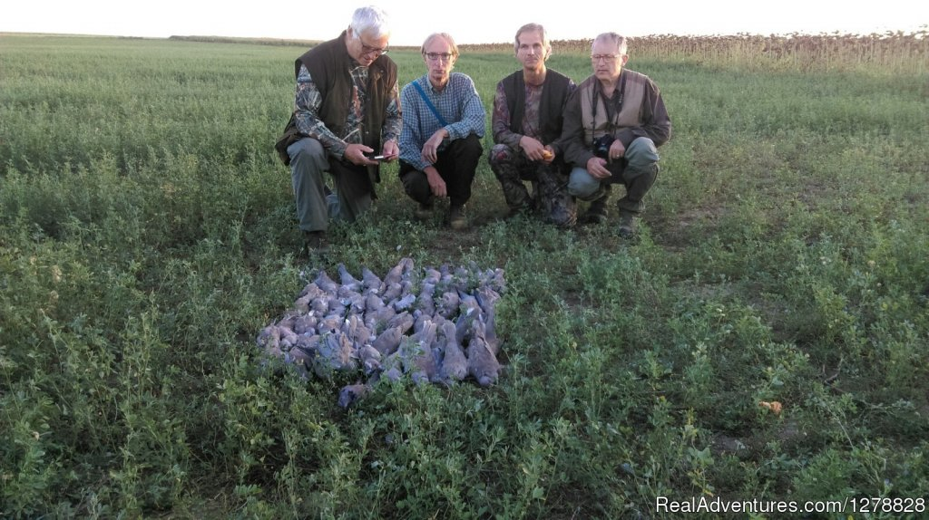 Quail and dove hunting | Image #19/26 | Big and small game hunting in Romania