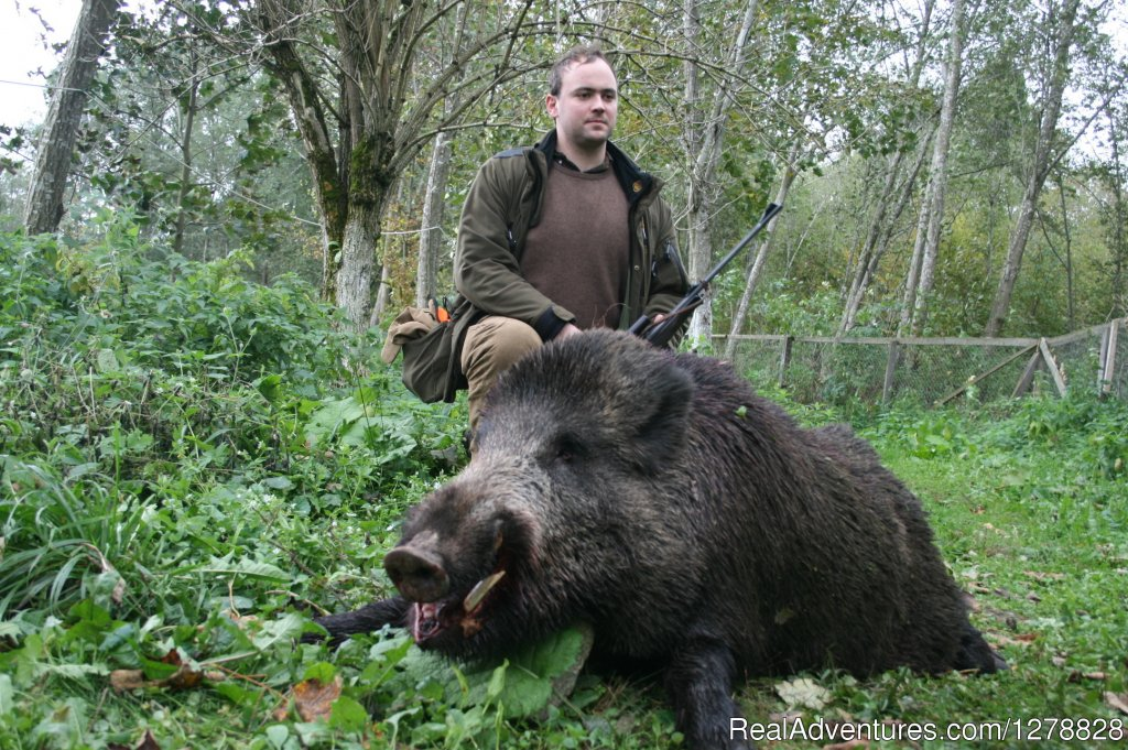 Wild boar hunting | Image #20/26 | Big and small game hunting in Romania