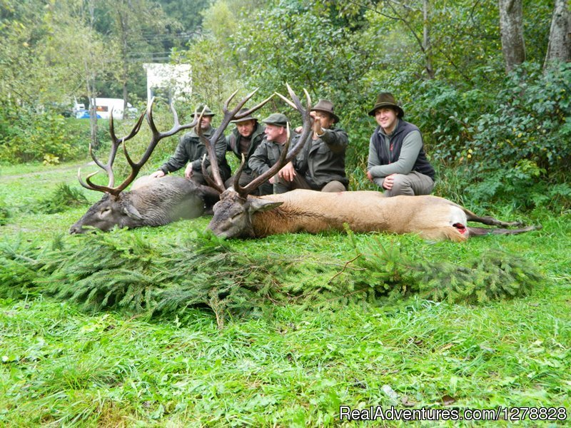Red deer hunting in Romania | Image #22/26 | Big and small game hunting in Romania