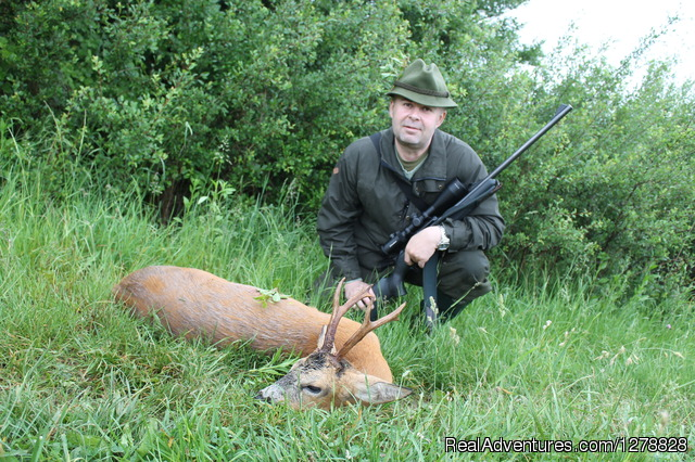 Roe deer stalking in Romania - Big and small game hunting in Romania