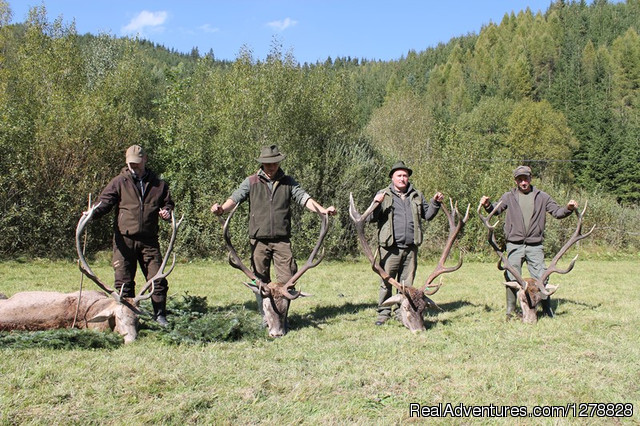 Brown bear hunting in Romania - Big game hunting in Romania/B&D Carpathian hunting