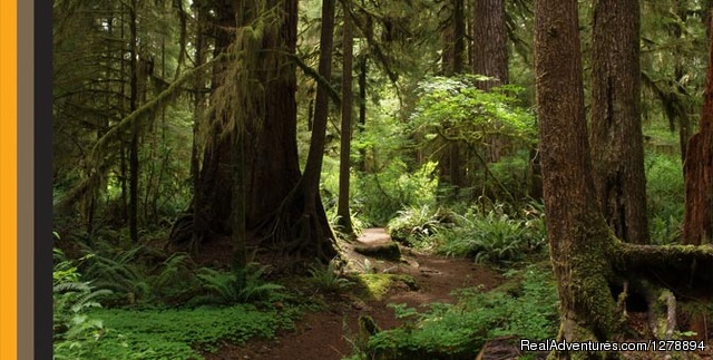 Rainforest Beauty - Horseback Riding in Golden Ears with Equutrails