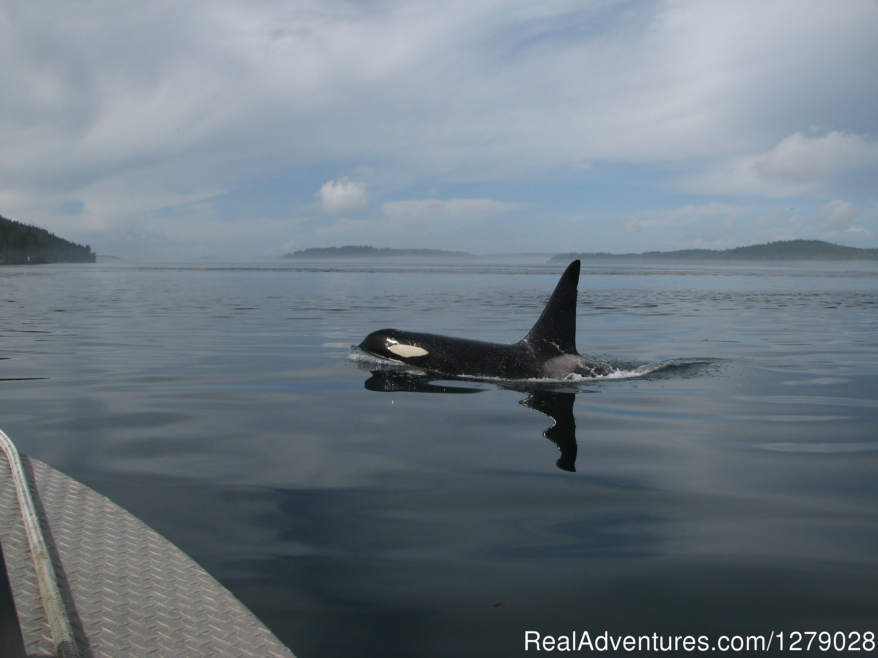 Orca Whale. | Image #6/6 | The Paddlers Inn