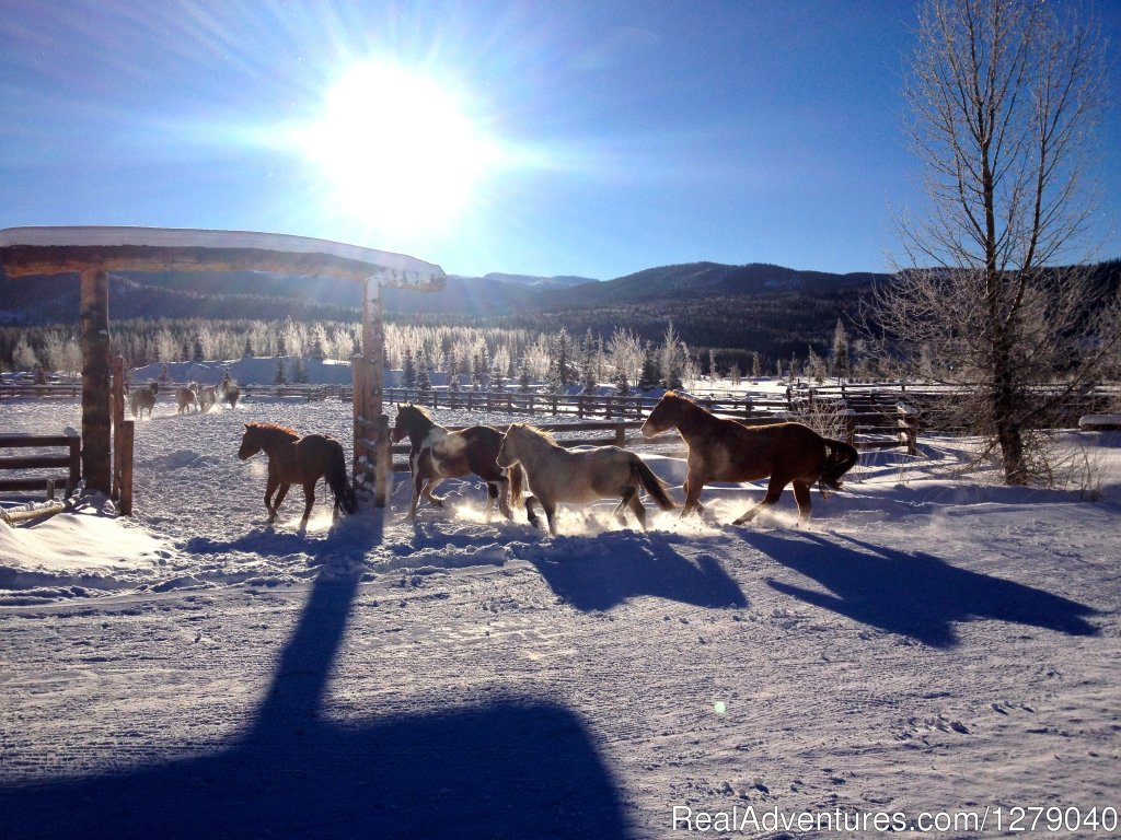 Winter vacations at Vista Verde--horses and snow