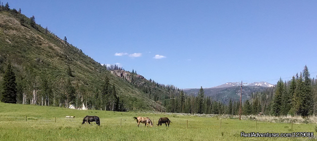 Ranch meadow - Elk River Guest Ranch