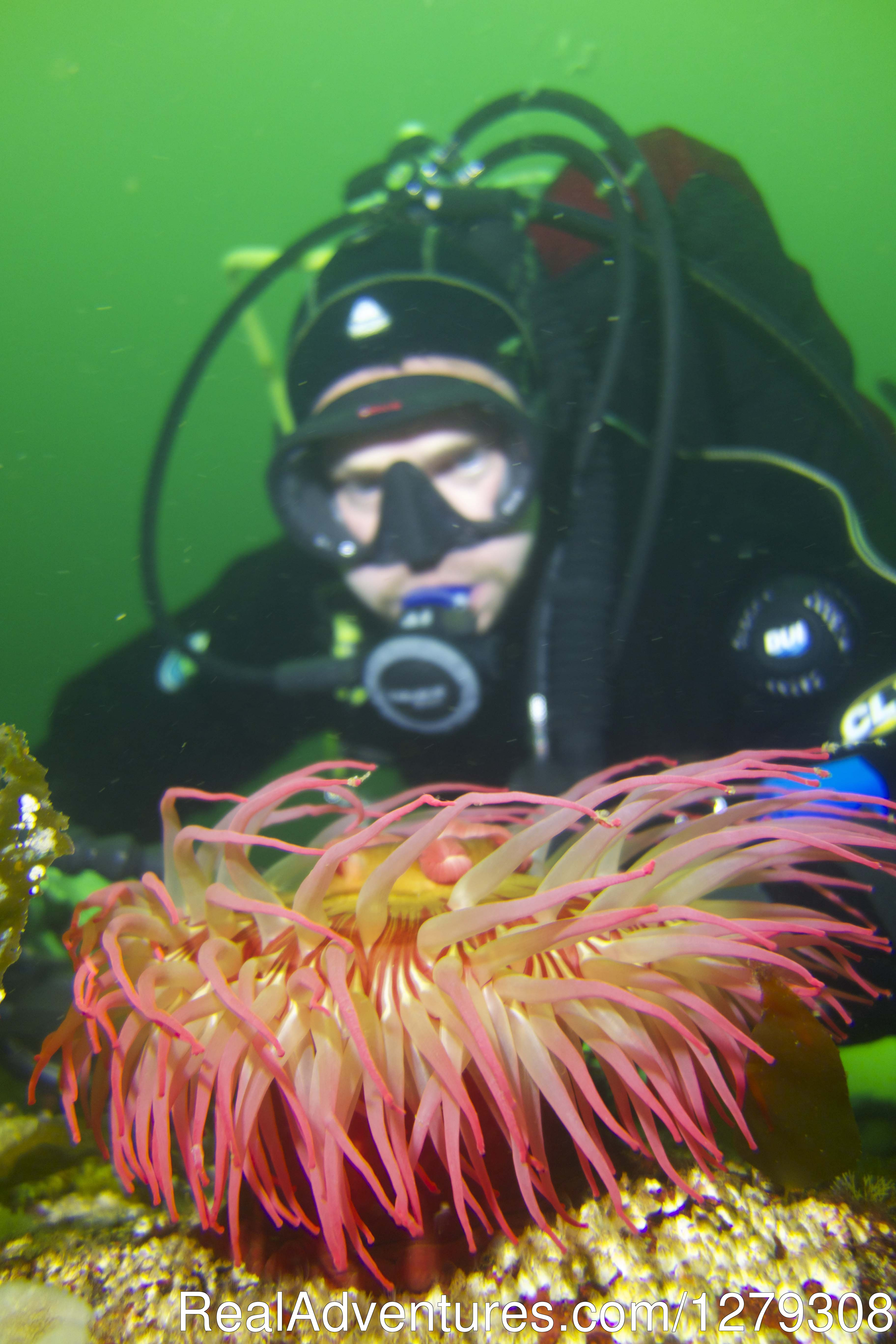 Anemone Diver