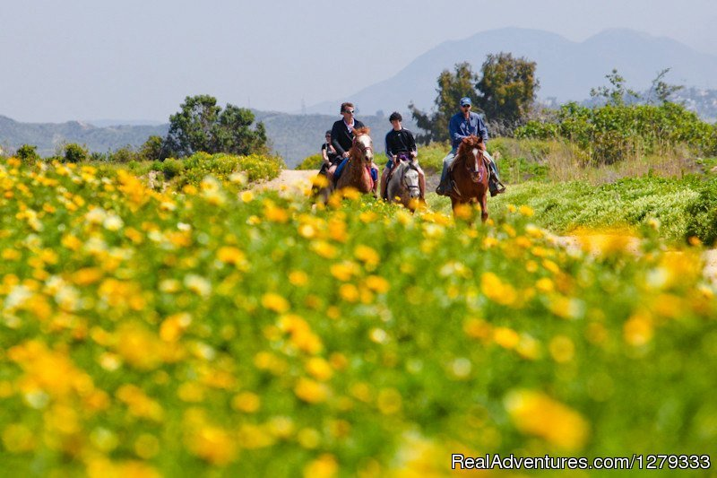Lush Scenic Trails | Image #8/13 | Beach & Trail Rides by Horseback