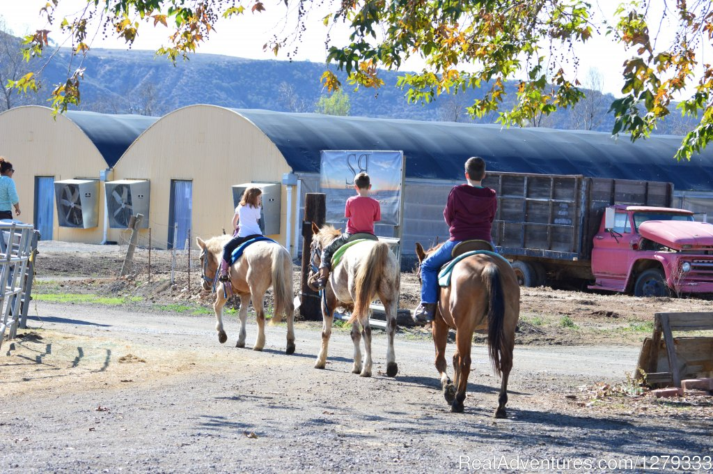 Rides for all Ages | Image #7/13 | Beach & Trail Rides by Horseback