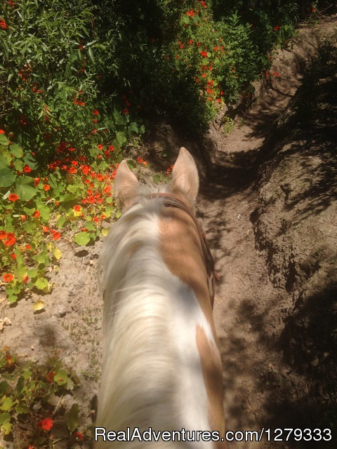 Beach & Trail Rides by Horseback