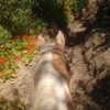 Happy Trails Horse Rentals Horseback Riding San Diego, United States