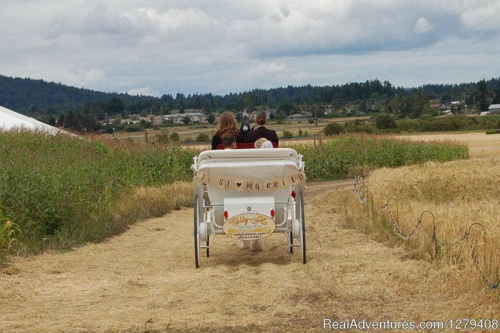 Image #13/13 | Private Horse-Drawn Carriage Tour
