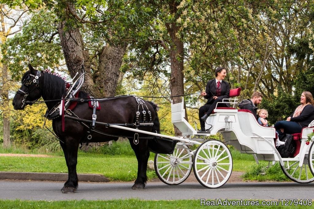 Image #3/13 | Private Horse-Drawn Carriage Tour