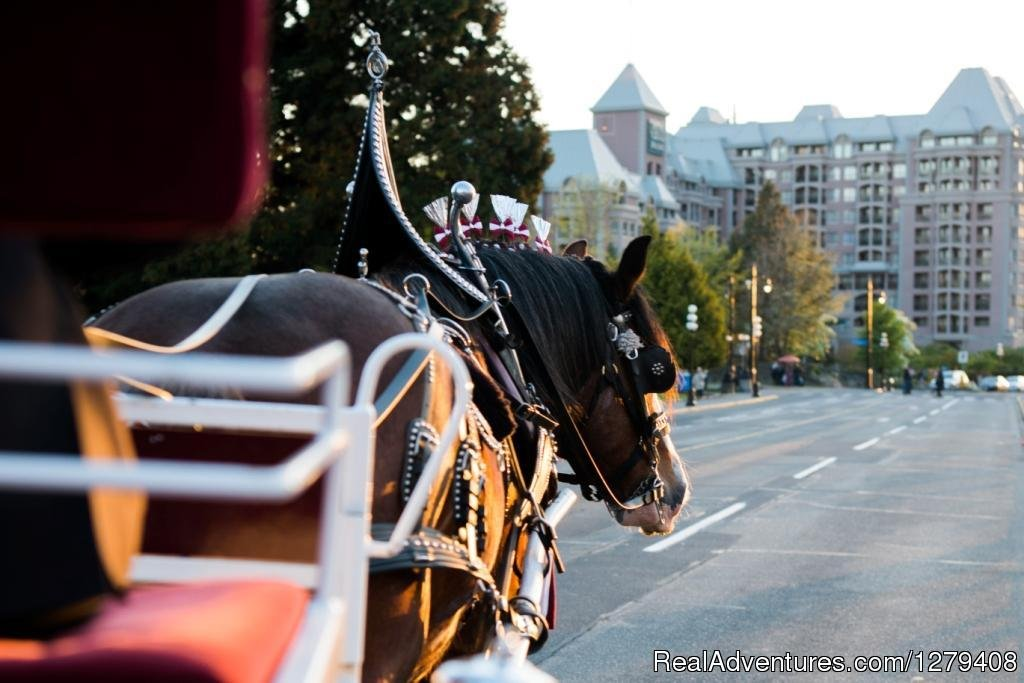 Image #6/13 | Private Horse-Drawn Carriage Tour
