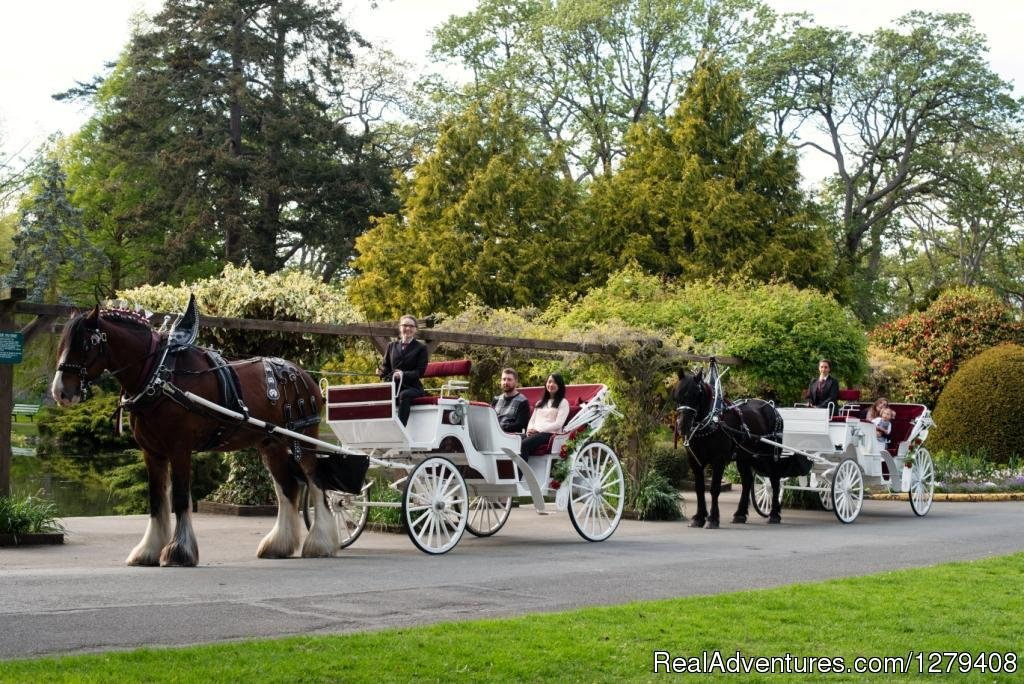 Image #8/13 | Private Horse-Drawn Carriage Tour