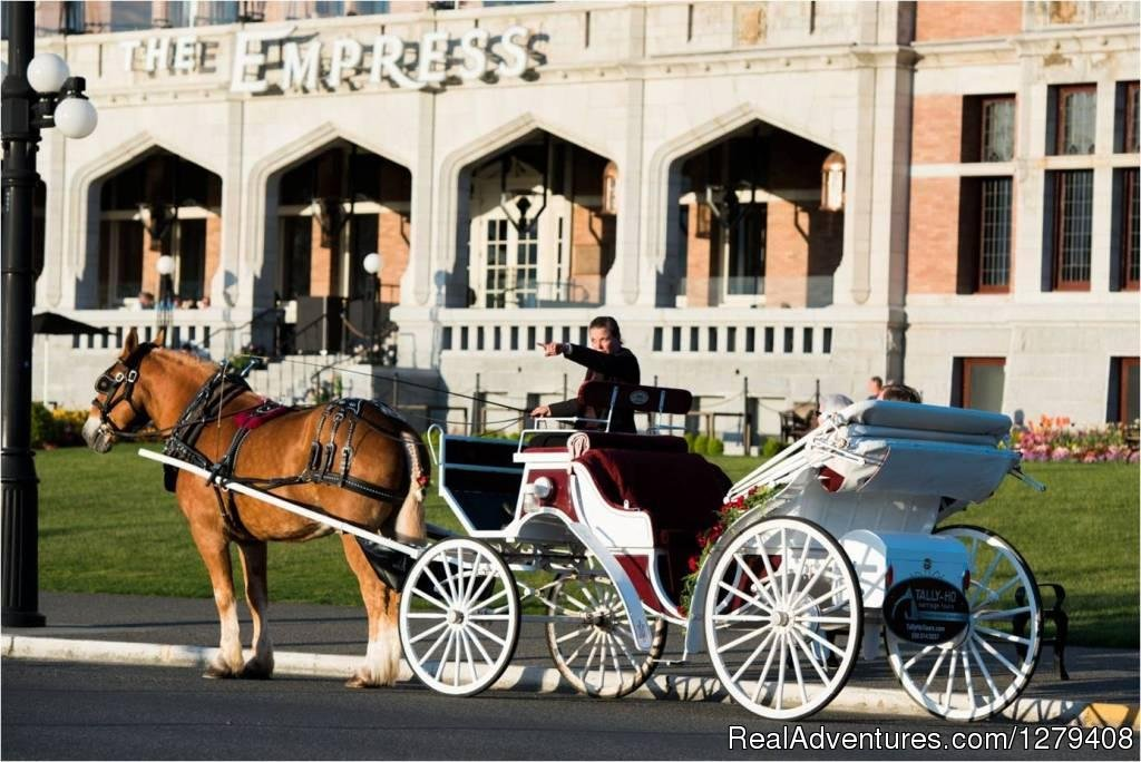 Image #11/13 | Private Horse-Drawn Carriage Tour