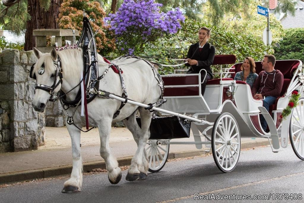 Image #7/13 | Private Horse-Drawn Carriage Tour