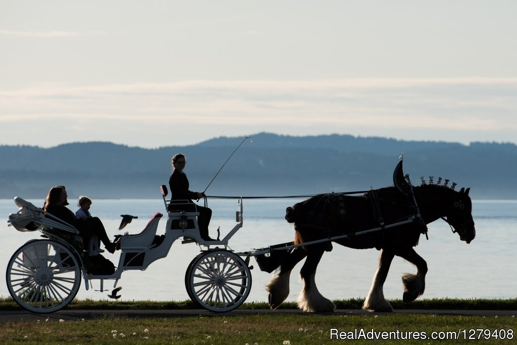 Image #4/13 | Private Horse-Drawn Carriage Tour