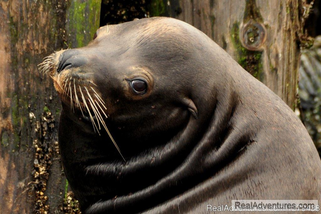 California sea lion | Image #12/24 | Whales, Wildlife & Spectacular Scenery