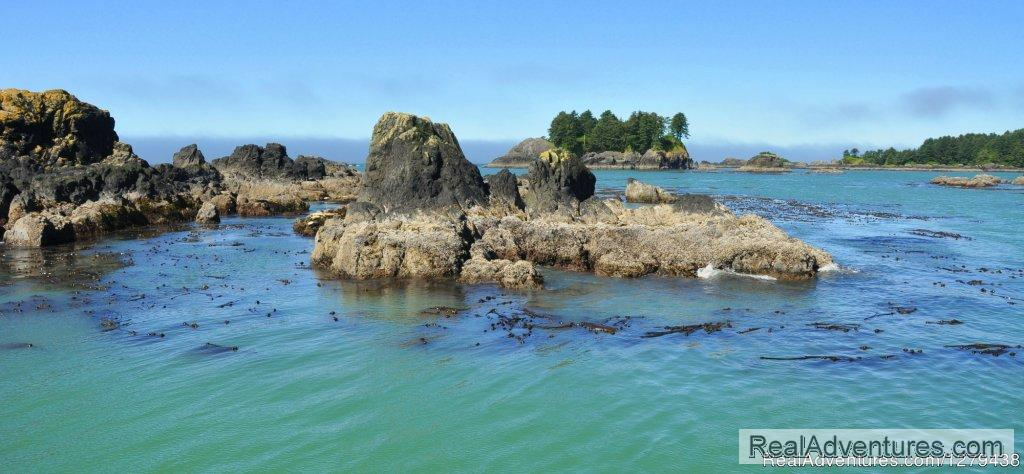 Rugged scenery of Barkley Sound | Image #21/24 | Whales, Wildlife & Spectacular Scenery