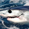 Shark fishing adventures Fishing Trips San Diego, California