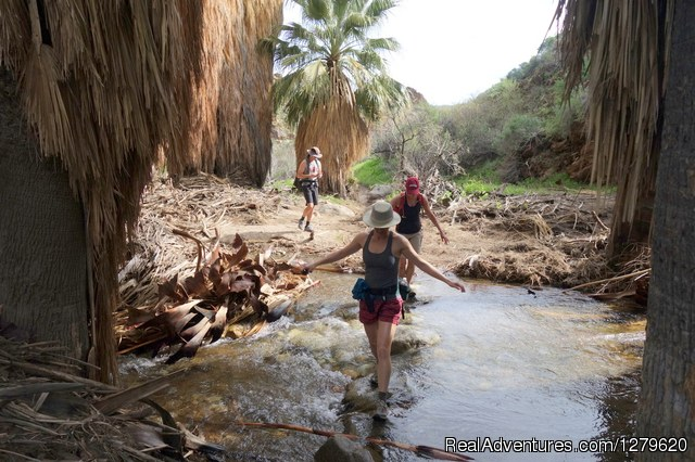 Trail Discovery Hiking Tours Palm Springs, California Hiking & Trekking