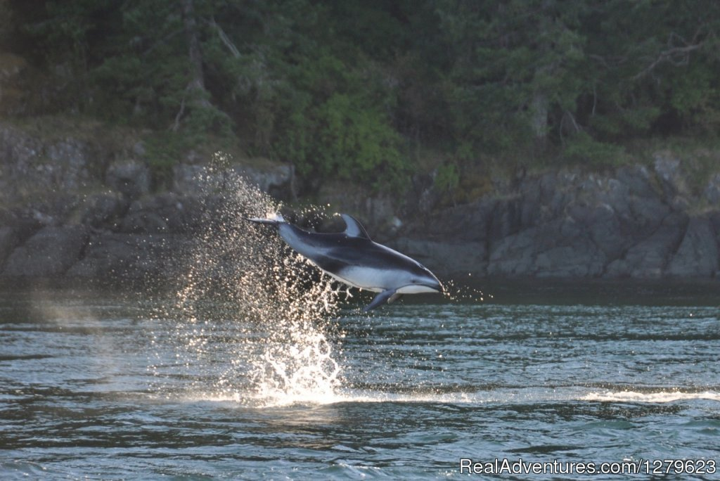 High Flier | Image #5/8 | Campbell River Whale Watching & Adventure Tours