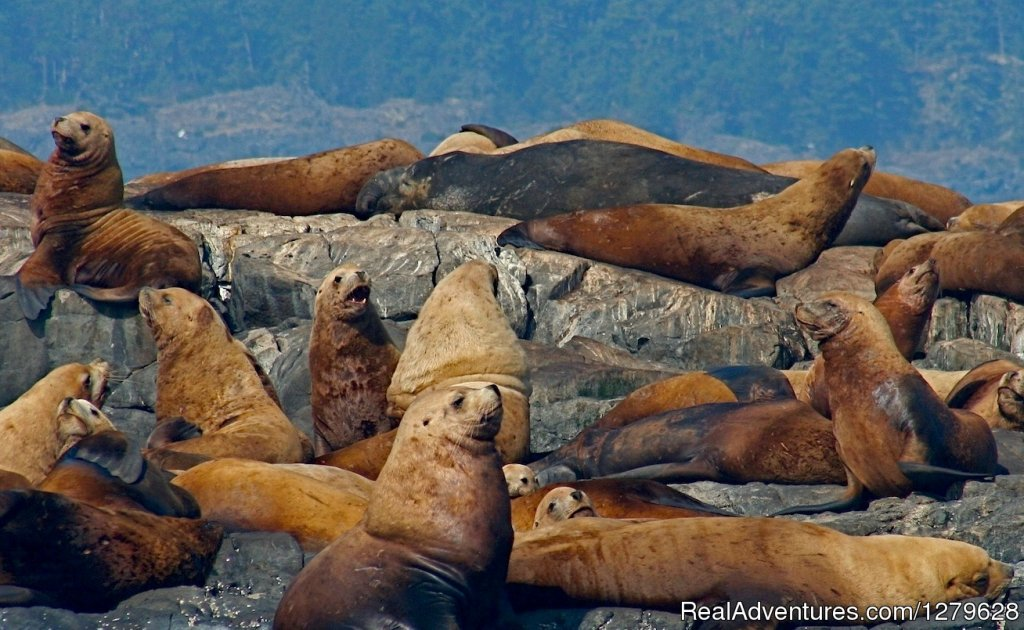 Sea Lions and Seals | Image #11/11 | Five Star Whale Watching