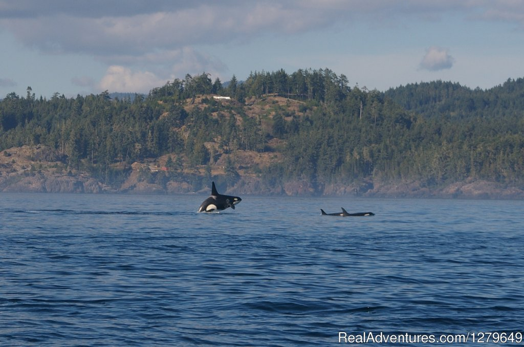Image #6/19 | Sooke Whale Watching