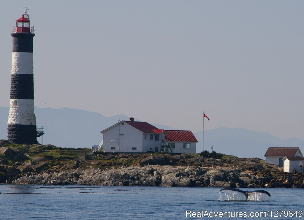 Image #8/19 | Sooke Whale Watching