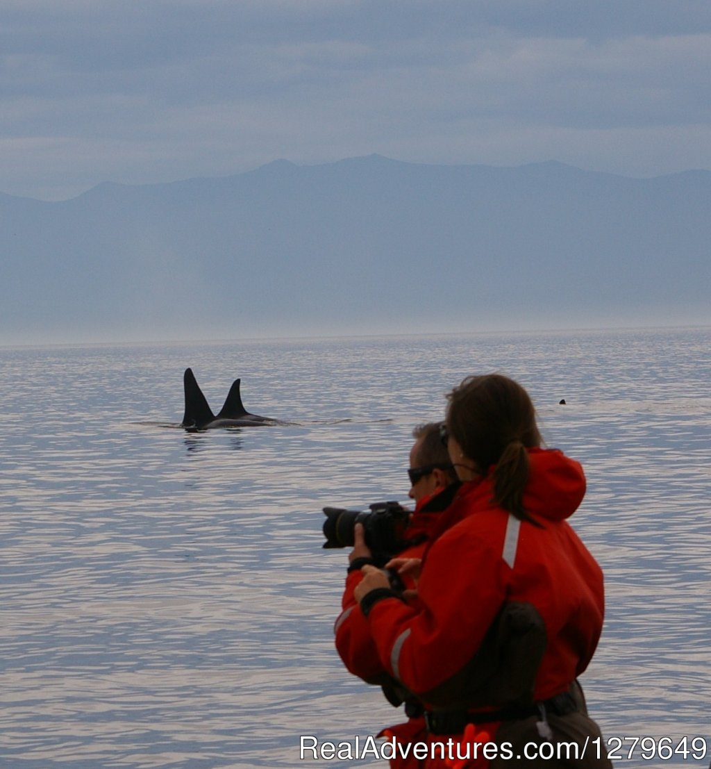 Image #9/19 | Sooke Whale Watching