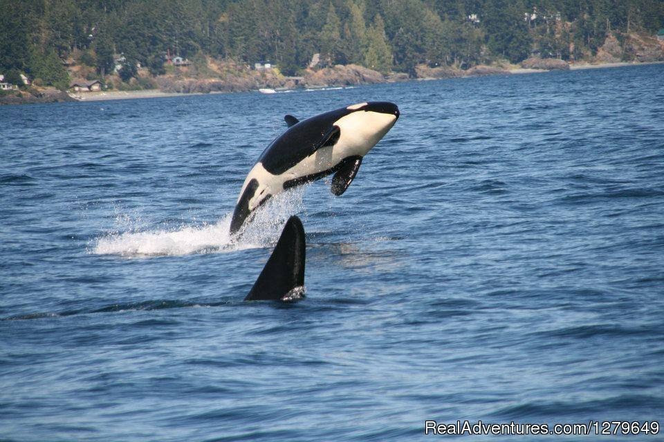 Are you ready to embark on a one-of-a-kind exploration with Vancouver Island's premium quality whale watching and eco-adventure company?
