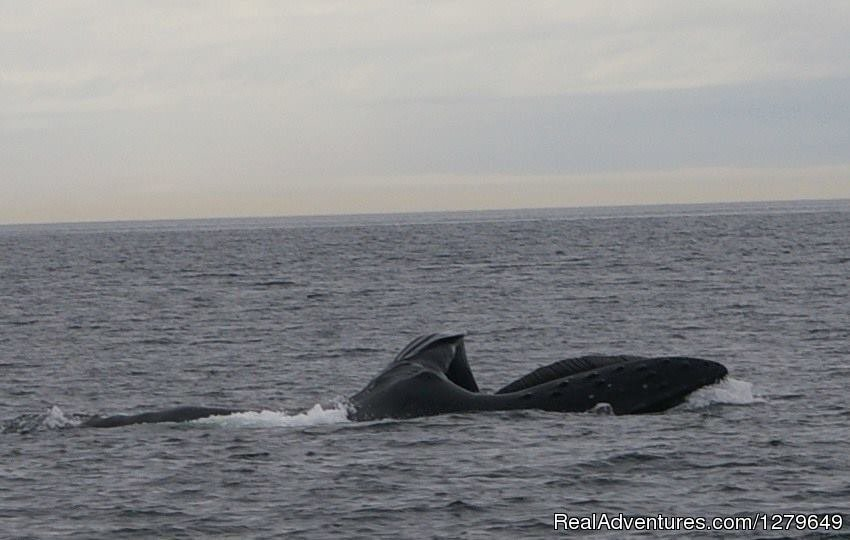 Image #15/19 | Sooke Whale Watching