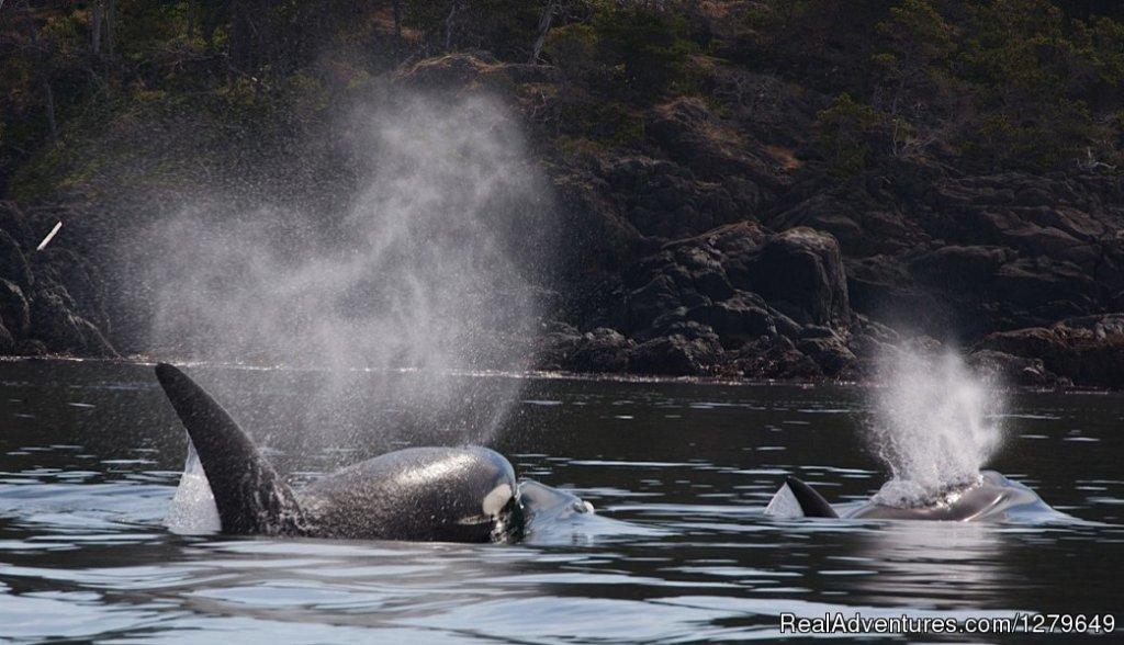 Image #16/19 | Sooke Whale Watching