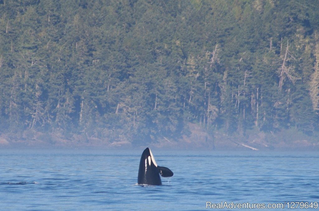 Image #18/19 | Sooke Whale Watching