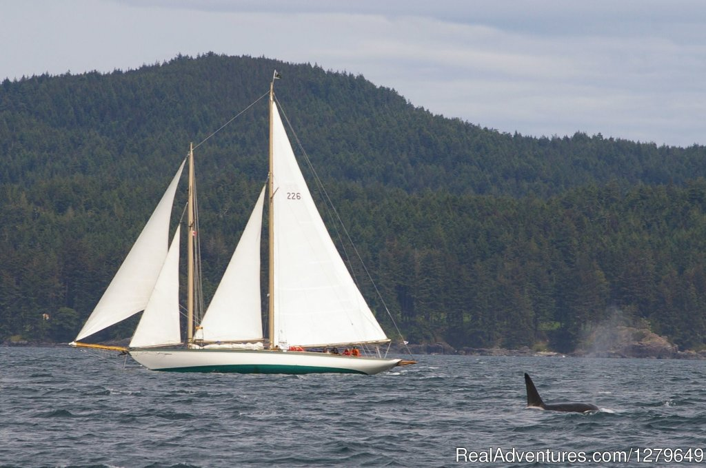 Image #19/19 | Sooke Whale Watching