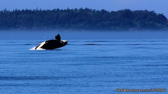 - Sooke Whale Watching